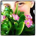 Flowerysurprise