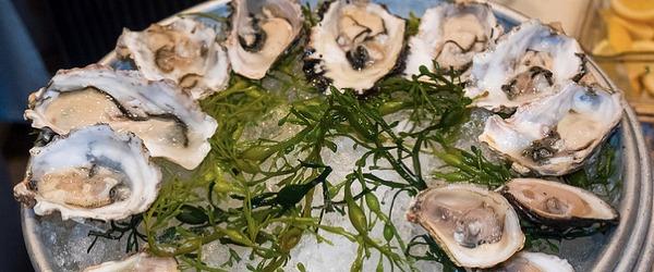 Oystersblog